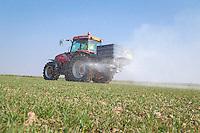 Spreading nitrogen onto winter wheat - Lincolnshire, March