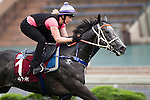 SHA TIN,HONG KONG-APRIL 26: Chautauqua,trained by Michael Hawkes,exercises in preparation for the Chairman's Sprint Prize at Sha Tin Racecourse on April 26,2016 in Sha Tin,New Territories,Hong Kong (Photo by Kaz Ishida/Eclipse Sportswire/Getty Images)
