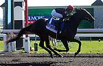 April 19, 2014 Mr Speaker wins the Coolmore Lexington Stakes