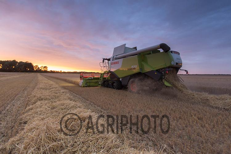 Harvesting Winter Barley as the sunsets <br /> Picture Tim Scrivener 07850 303986