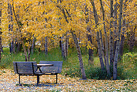 Bench and cottonwoods in Georgetown, Colorado.  I photographed this image next to a gift shop in historic Georgetown.<br /> <br /> Canon EOS 5D Mk II, Tokina 100mm macro lens