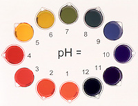 pH INDICATOR: UNIVERSAL INDICATOR pH 1-12<br /> Indicator displays spectrum from red to violet as pH increases. pH 1-6 consists of decreasing molar solutions of HCl(aq) (.1m, .01m, .001m, etc).  pH 7 is water & ammonium acetate.  pH 12-8 consists of decreasing molar solutions of NaOH(aq). (same as HCl)