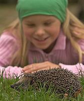 Mädchen, Kind mit Europäischer Igel im Garten, Westigel, Braunbrustigel, Erinaceus europaeus, Western hedgehog, Hérisson d`Europe de l`Ouest