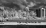 HALLANDALE, FLORIDA - MARCH 30: Horses head down the backstretch in an undercard race on Florida Derby Day at Gulfstream Park Race Track in Hallandale Beach, Florida. (Image made with camera with infrared converted sensor) Scott Serio/Eclipse Sportswire/CSM