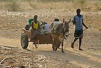 BURKINA FASO Kaya, children transport vegetables with donkey cart from farm to market  | <br /> BURKINA FASO Kaya, Kinder transportieren mit einem Eselkarren Gemuese vom Feld zum Markt