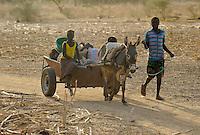 BURKINA FASO Kaya, children transport vegetables with donkey cart from farm to market  | <br /> BURKINA FASO Kaya, Kinder transportieren mit einem Eselkarren Gemuese vom Feld zum Markt
