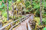 Footbridge at Silver Falls,  Ohanapecosh River in Mt. Rainier National Park, Washington State, USA.  Long exposure showing river current.