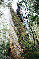 Image Ref: T65<br /> Location: Ada Tree Walk, Yarra Ranges<br /> Date: 16 July, 2016