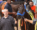 April 18, 2015: Shared Belief in paddock before Moreno wins the 1,500,000 Grade II Charles Town Classic for 4-year olds & up, going 1 1/8 mile at Charles Town Racetrack. Trainer: Eric Guillot. Owner:Southern Equine Stable, LLC . Sue Kawczynski/ESW/CSM