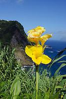 Miradouro dos Caimbros auf der Insel Flores, Azoren, Portugal