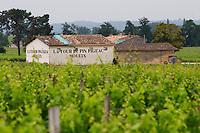 Chateau La Tour du Pin Figeac Moueix undergoing renovation and its vineyard Saint Emilion Bordeaux Gironde Aquitaine France