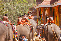 India,Kerala, Thrissur, Utharalikavu, Elephant Pooram  is one of the biggest festivals in India where elephants are decorated magnificiently