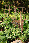Pleasant Valley garden tomato cage