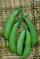 HS26-013b   Pea - edible sugar pea pods - Sugar Ann variety
