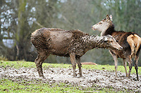 BNPS.co.uk (01202 558833)<br />