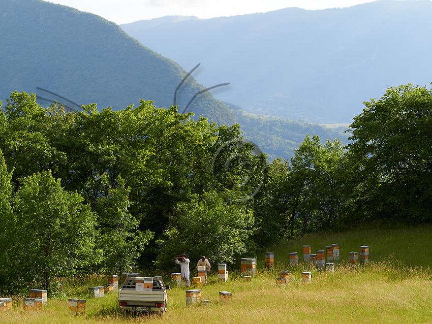 The small Warré hives are today used by professional beekeepers for the production of swarms and queen bees.<br /> Les ruches warré de plus petites tailles sont aujourd'hui utilisées par des apiculteurs professionnels pour la production d'essaim et de reines.