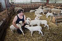 Europe/France/Midi-Pyrénées/46/Lot/Lacave: Gisèle Lagarrigue et ses agneaux fermiers du quercy label rouge Auto N°: 2008-212