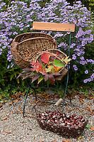 Herbst-Früchte in Körben gesammelt, Eicheln, Kastanien, Buchecker, buntes Laub vom Wilden Wein, herbstliche Stimmung, im Hintergrund blühen Astern, Herbst, herbstlich
