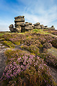 A millstone grit formation known as the 'Coach and Horses' on Derwent Edge, with Common Heather / Ling {Calluna vulgaris} in bloom. Peak District National Park, Derbyshire, UK. September.