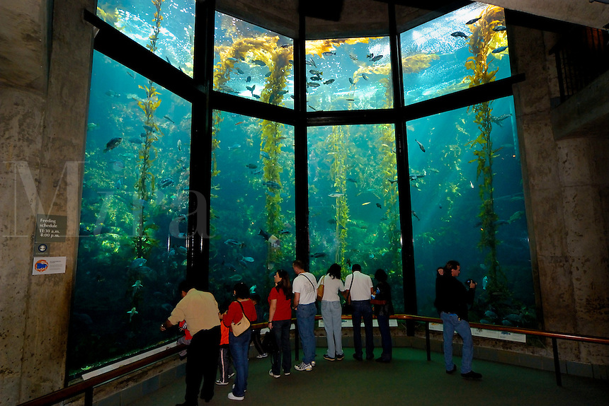 Monterey Bay Aquarium kelp tank, Monterey, California