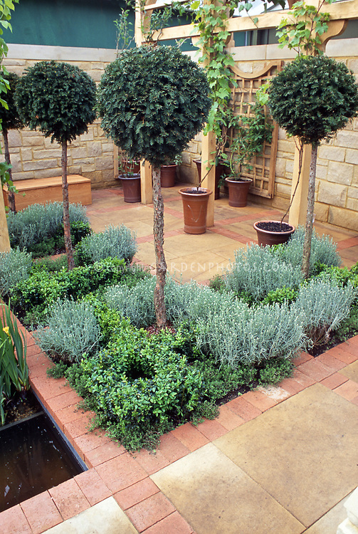 Dry landscape: Topiary standard trained yew shrubs, brick and stone patiuo, stone wall, trellis with container grapevines, Santolina and boxwood Buxus planted inset into patio, Mediterranean style garden