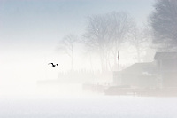 Fog hangs over Lake Hopatcong and flying bird.