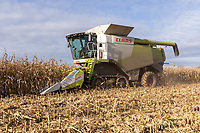 19.11.2020 Contractors harvesting maze for crimping for dairy cattle feedstock<br /> ©Tim Scrivener Photographer 07850 303986<br />      ....Covering Agriculture In The UK....