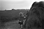 Crofting building a hay stack Shetland Islands 1970s. New oil industry houses on the hill in distance.