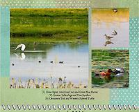 March 2011 Birds of a Feather Calendar
