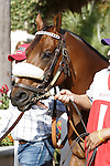 Amazombie heading into the paddock for the Bing Crosby Stakes (G1) at Del Mar Race Course in Del Mar, California on July 29, 2012.