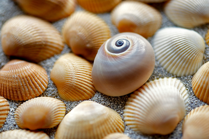 Snail with small seasheels and beach sand.