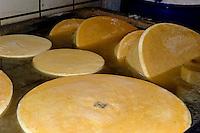 Emmentaler Käse in der Bergbauern Sennerei in Ofterschwang-Hüttenberg  im Allgäu, Bayern, Deutschland<br /> alpine dairy with Emmental cheese in Ofterschwang-Hüttenberg, Allgäu, Bavaria, Germany