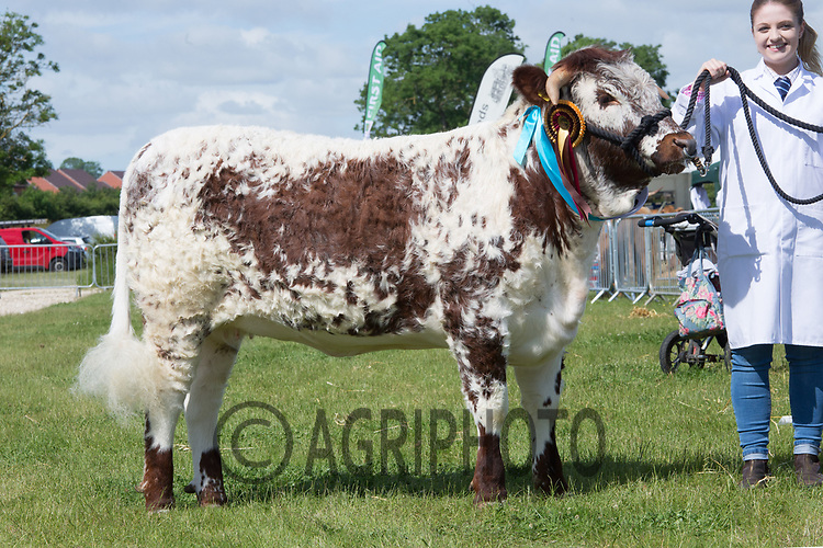 Rutland County Show 2017<br /> Riversando Quinine owned by C G B burton & Son Ltd<br /> Picture Tim Scrivener 07850 303986<br /> ….covering agriculture in the UK….