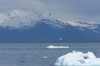 An oil tanker, trailed by a support vessel, travels south along Valdez Arm in Prince William Sound, Southcentral Alaska, with icebergs in the foreground, on a sunny spring afternoon in early May.