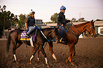 OCT 26: Breeders' Cup Distaff entrant Midnight Bisou, trained by Steven M. Asmussen, at Santa Anita Park in Arcadia, California on Oct 26, 2019. Evers/Eclipse Sportswire/Breeders' Cup