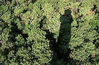 Europe/France/Aquitaine/33/Gironde/Bassin d'Arcachon/Le Cap Ferret: La forét de pins vue depuis le phare et ombre portée du phare