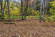Site of logging Camp 7 of the East Branch & Lincoln Railroad (1893 -1948) along today's Lincoln Woods Trail in Lincoln, New Hampshire during the autumn months.