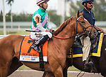 HALLANDALE BEACH, FL - March 31: Hofburg, #7, parades onto the track with his game face under Jose Ortiz for the Grade I Xpressbet Florida Derby at Gulfstream Park on March 31, 2018 in Hallandale Beach, FL. (Photo by Carson Dennis/Eclipse Sportswire/Getty Images.)