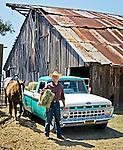 Jason feeding horses from his 1968 Ford Pickup Truck, San Luis Obispo, California
