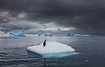 Gentoo penguin on an iceberg, Antarctica<br />