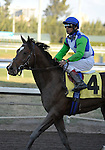 31 January 2009: Nicanor and jockey Edgar Prado after the colt ran in his first race and finished a disappointing 11th in a maiden race at Gulfstream Park in Hallandale, Florida.