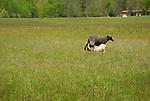 Steam Valley Fiber Farm. Sheep
