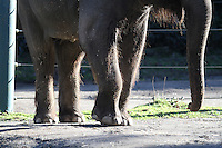 Elephants at the Woodland Park Zoo. <br /> (photo © Karen Ducey Photography)