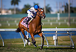 HALLANDALE FL - FEBRUARY 27: Heart to Heart #8, ridden by Julien Leparoux wins the Canadian Turf Stakes at Gulfstream Park on February 27, 2016 in Hallandale, Florida.(Photo by Alex Evers/Eclipse Sportswire/Getty Images)