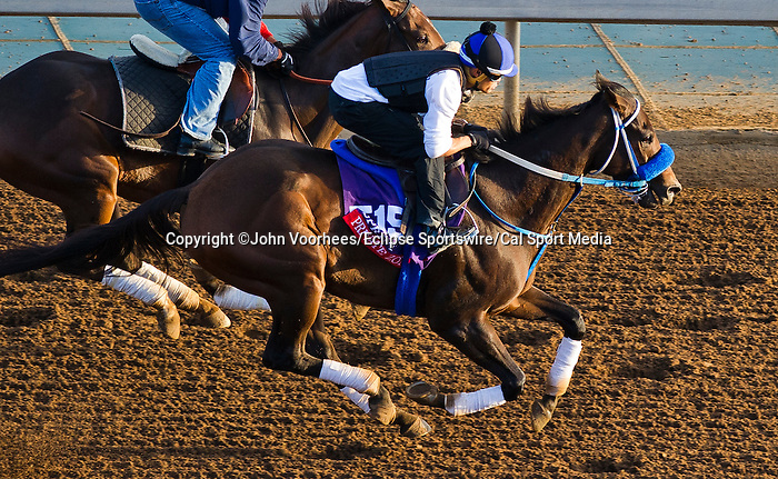 October 27, 2014:  Private Zone, trained by Alfredo Velazquez, exercises in preparation for the Breeders' Cup Xpressbet Sprint at Santa Anita Race Course in Arcadia, California on October 27, 2014. John Voorhees/ESW/CSM