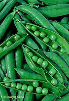 HS26-130a   Pea - shelling pea pods showing pods with peas inside - Green Arrow variety
