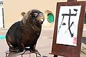 Sea lions perform New Year's attraction at Hakkeijima Sea Paradise