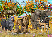 REALISTIC ANIMALS, REALISTISCHE TIERE, ANIMALES REALISTICOS, zeich1, paintings+++++,KL4629,#a#, EVERYDAY ,big five,lion,rhino,leopard,cape buffalo,elephant