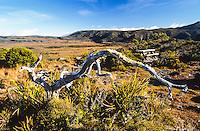 Gouland Downs on Heaphy Track, Kahurangi National Park, Nelson Region, New Zealand