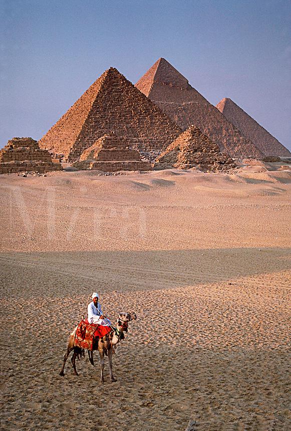 Camel walking near the Pyramids at Giza